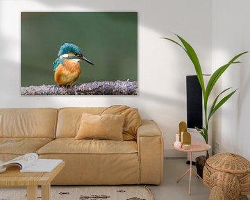 IJsvogel closeup van Paul Weekers Fotografie