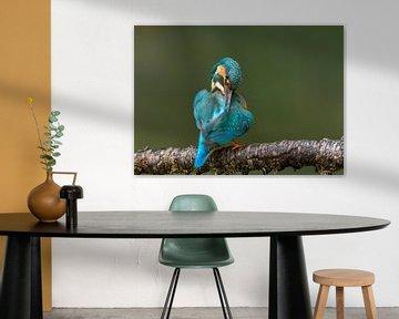 IJsvogel geeft zichzelf een poetsbeurt van Paul Weekers Fotografie