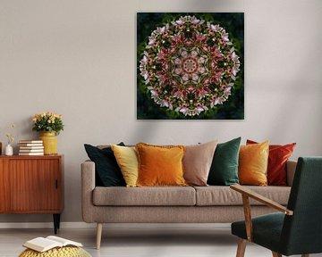 Kaleidoskop-Azalee von Carla van Zomeren