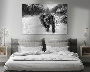 Schotse hooglanders in de sneeuw van Foto Amsterdam / Peter Bartelings