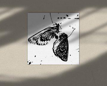 Schmetterlinge - Metamorphose von Christine Nöhmeier