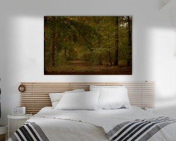 Veluwse bossen van Marcha Bos Fotografie