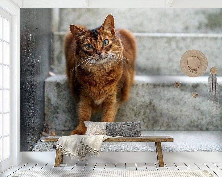 Beispiel fototapete: Somali-Katze von D Art