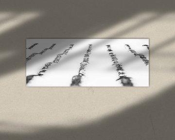 Experiment in Schwarz-Weiß-Grau von Norbert Sülzner