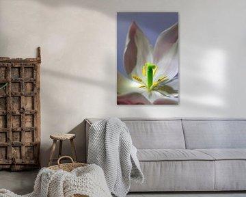Tulpe von Thomas Jäger