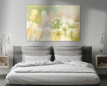 weiße tulpen im frühling von Dörte Stiller
