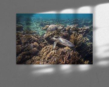 Schildpad in een koraaltuin, Egypte van Daniëlle van der meule