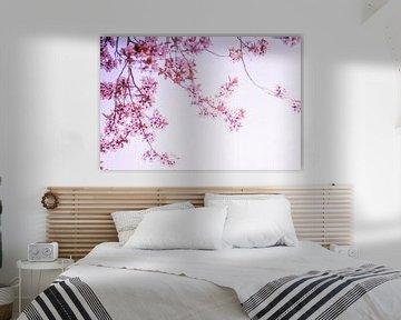 kirschblütenzweige von Dörte Stiller