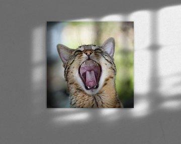 Gapende kat van WittholmPhotography
