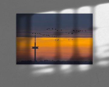 Fernsehturm bei Regensburg bei Sonnenaufgang mit einem Schwarm Vögel von Robert Ruidl