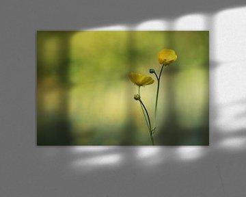 Butterblumen von Mireille Breen
