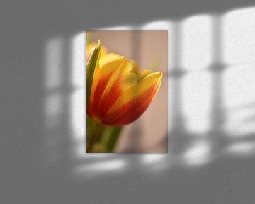 Orange-gelbe Tulpe von Philipp Klassen