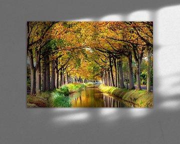 Bomenrij langs water
