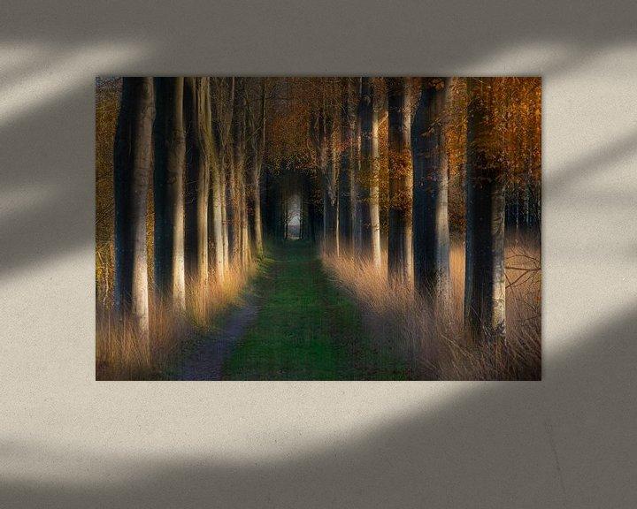 Sfeerimpressie: Boslaan in de herfst van Franke de Jong