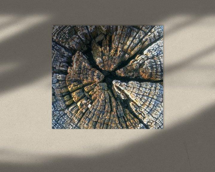 Sfeerimpressie: verweerd hout van Hanneke Bantje