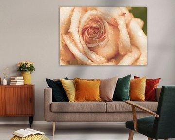 Roos met tranen in abrikoos van Die Farbenfluesterin
