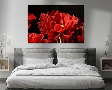 Eine rote Chrysantheme von Philipp Klassen