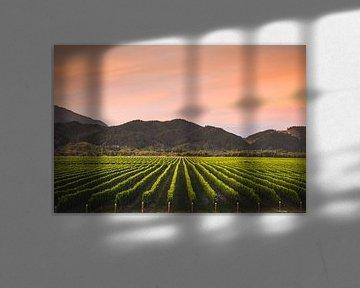 Wijngaard in Blenheim, Nieuw-Zeeland van Tom in 't Veld