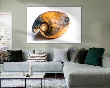 Macro coquille d'escargot sur fond blanc sur Dieter Walther