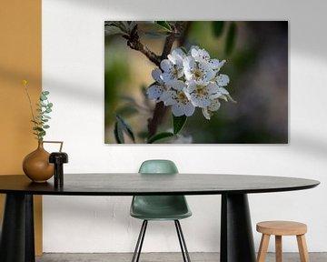 Apfelblüte von Frank Janssen