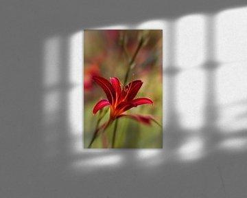 Lilie von Rob Boon