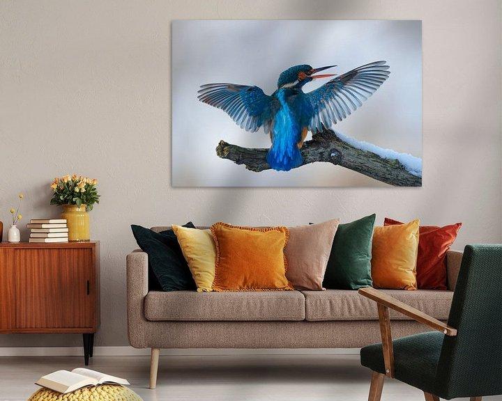 Impression: Martin-pêcheur - La perfection bleue sur IJsvogels.nl - Corné van Oosterhout