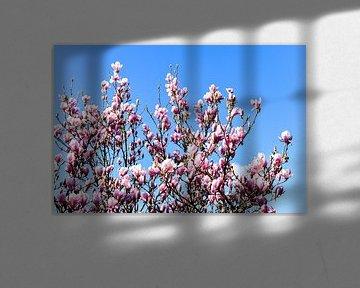 Tulpenboom van Hermineke Pijls