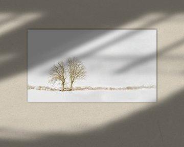 Bäume Schnee Landschaft Lentevreugd Waaenaar
