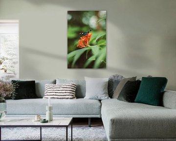 Schmetterling auf Blume von Veri Gutte