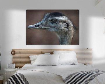 Kop struisvogel met bruine achtergrond