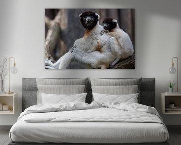 Moeder aap (gekroonde sifaka) met kind