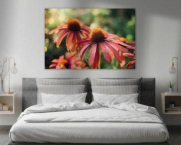 Echinacea von Auke Hamers