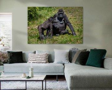 Gorilla's, moeder met jong die aan het bedelen is van Joost Adriaanse