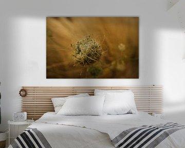 Daucus Carota / Bijennest van Auke Hamers