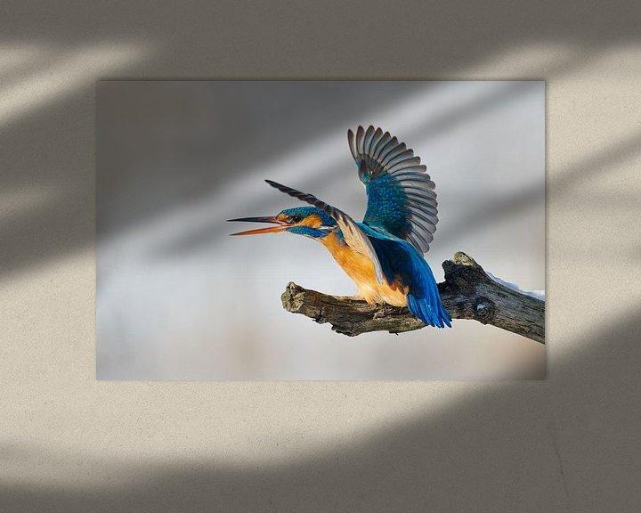 Beispiel: Eisvogel - mein Platz! von IJsvogels.nl - Corné van Oosterhout
