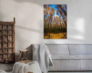Chute verticale (Steensel, Pays-Bas)