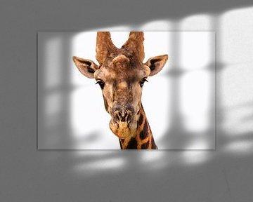 Dieren in Senegal van videomundum