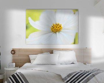 Frische weiße Blume im Garten Nahaufnahme. von Doris van Meggelen