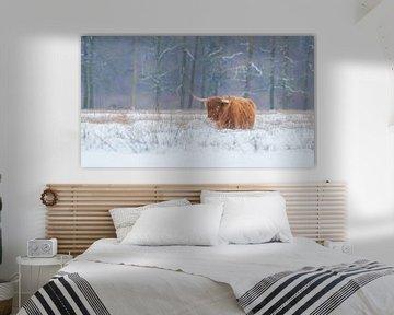 Schotse hooglander in de sneeuw van Francis Dost
