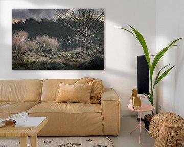 Ein Rentier in den Amsterdamer Dünen von Digitale Schilderijen