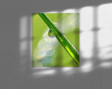 Morning Light (Druppel aan Grasspriet) van Caroline Lichthart