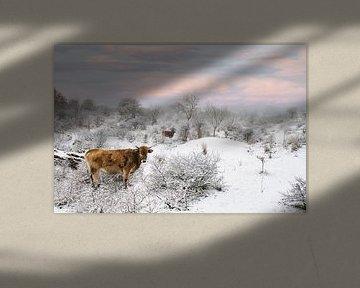 Wild rund in Zeeuws sneeuwlandschap