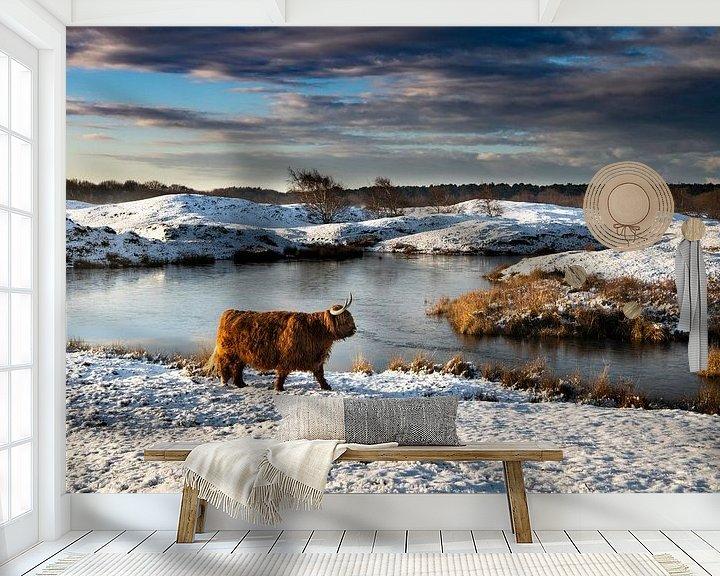 Sfeerimpressie behang: Schotse Hooglander in sneeuwlandschap Zeepeduinen van Paula Romein