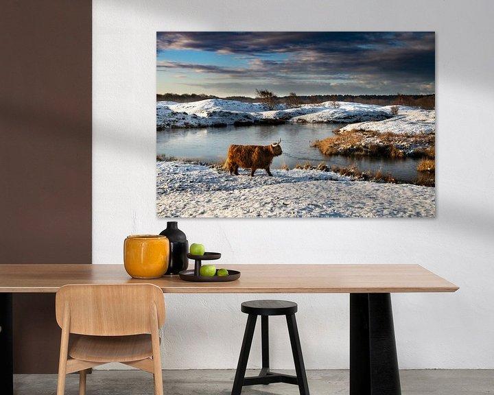 Sfeerimpressie: Schotse Hooglander in sneeuwlandschap Zeepeduinen van Paula Romein