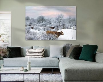 Wild rund in sneeuwlandschap