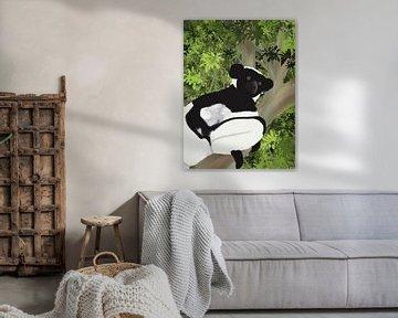 Schwarzer und weißer Lemur (Indri), Madagaskar von Piev