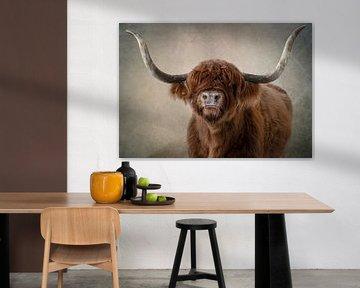 Schotse Hooglander: portret in kleur van Marjolein van Middelkoop