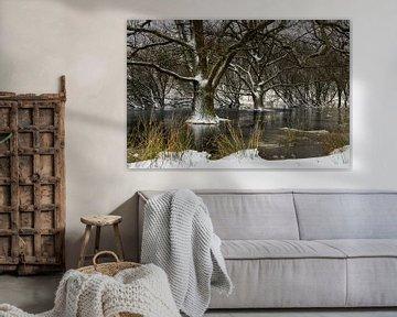 Bomen in ijs in de Zeepeduinen van Paula Romein