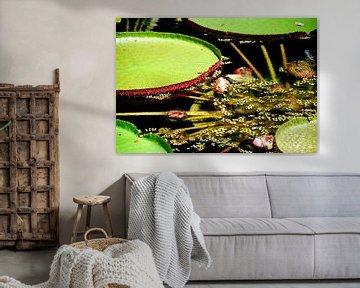 Groen lelieblad in het water van Homemade Photos