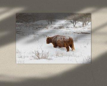 Schotse Hooglander in de sneeuw van Esther Bakker-van Aalderen